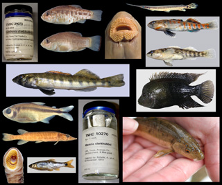 collage of Texas fish